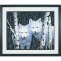 Два белых волка между берез Раскраска (картина) по номерам акриловыми красками Dimensions