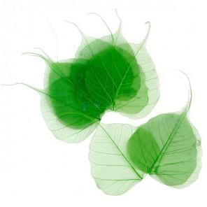 Скелетированные листочки  MAGIC HOBBY арт.TBY-LB-02  цв.6 зеленый
