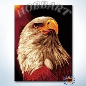 Гордый орел Раскраска по номерам акриловыми красками на холсте Hobbart
