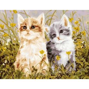 Два котенка Раскраска по номерам на холсте Menglei