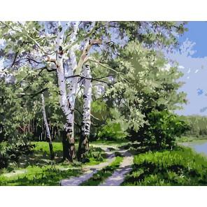 Белая береза Раскраска ( картина ) по номерам акриловыми красками на холсте Белоснежка