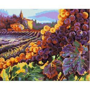 Тосканский урожай (художник Клиф Хедфилд) Раскраска картина по номерам акриловыми красками Plaid