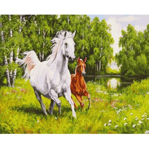 На воле Раскраска ( картина ) по номерам акриловыми красками на холсте Белоснежка