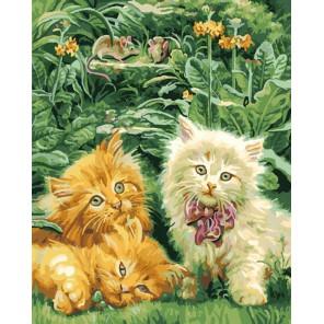 Дружные котята Раскраска ( картина ) по номерам акриловыми красками на холсте Iteso