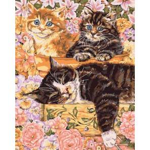 Тихий сад Раскраска картина по номерам акриловыми красками Plaid   Купить раскраски по номерам
