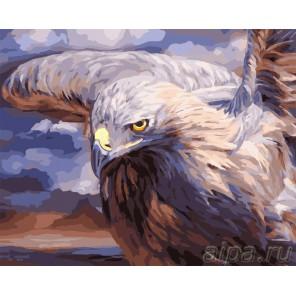 Орел Раскраска картина по номерам акриловыми красками на холсте Русская живопись