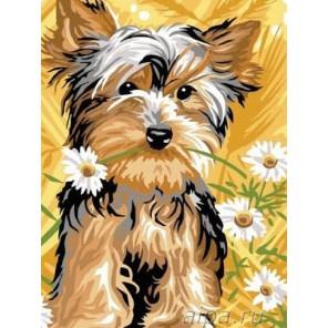 Маленький йорк Раскраска картина по номерам акриловыми красками на холсте Molly
