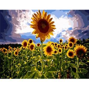 Вслед за солнцем Раскраска по номерам акриловыми красками на холсте Menglei