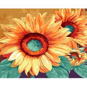 Подсолнухи Марианны Брум Раскраска по номерам акриловыми красками на холсте Menglei