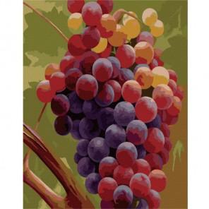 Виноград Хайнца Шольнхаммера Раскраска картина по номерам акриловыми красками на холсте Menglei