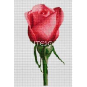 Роза Алмазная мозаика на твердой основе Iteso | Купить алмазную мозаику