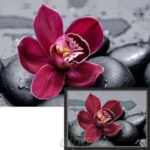 Королевская орхидея Алмазная мозаика вышивка Гранни | Купить алмазную мозаику