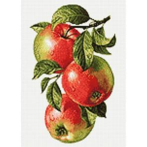 Ветвь яблони Алмазная мозаика вышивка Гранни  | Алмазная мозаика купить