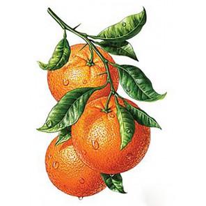 Апельсиновая ветвь Алмазная вышивка мозаика Гранни | Алмазная вышивка купить