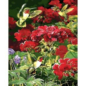 Колибри в саду Раскраска картина по номерам акриловыми красками на холсте | Картина по номерам купить