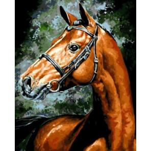 Конь Раскраска картина по номерам акриловыми красками на холсте   Картина по номерам купить