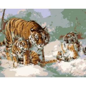 Семья тигров в снегу Раскраска картина по номерам на холсте