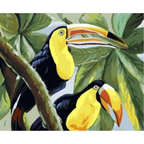 Туканы Тины Бруно Раскраска картина по номерам акриловыми красками на холсте | Картина по цифрам купить