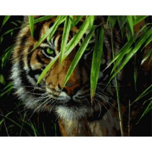 Тигр в джунглях Раскраска картина по номерам на холсте