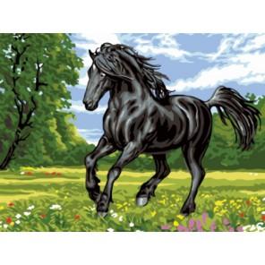 Красавец Раскраска картина по номерам акриловыми красками на холсте | Картина по цифрам купить