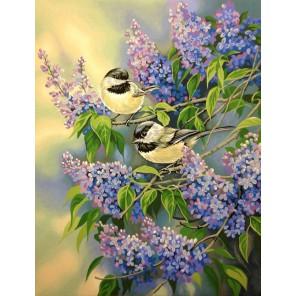 Синички и сирень 91361 Раскраска картина по номерам акриловыми красками Dimensions