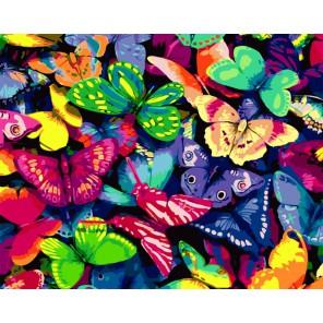 Разноцветные бабочки Раскраска картина по номерам акриловыми красками на холсте
