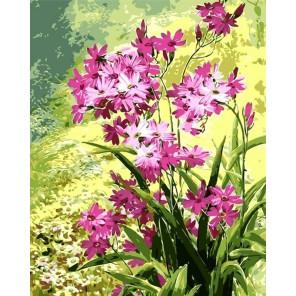 Луговые цветы Раскраска картина по номерам на холсте