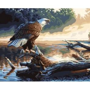 Орел на дереве Раскраска картина по номерам акриловыми красками на холсте