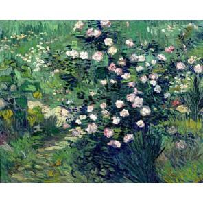 Розовый куст в цвету (репродукция Ван Гога)  Раскраска картина по номерам акриловыми красками на холсте Molly