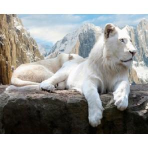 Белый лев Раскраска картина по номерам акриловыми красками на холсте Molly