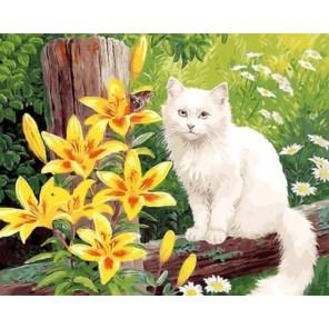Пушистый красавец на заборе Раскраска картина по номерам акриловыми красками на холсте
