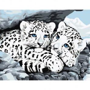 Снежные барсы Раскраска картина по номерам акриловыми красками на холсте Molly