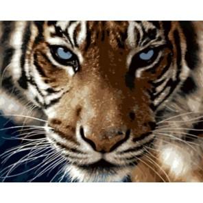 Взгляд тигра Раскраска картина по номерам акриловыми красками на холсте