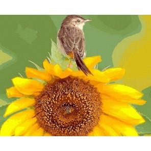 Воробушек Раскраска картина по номерам акриловыми красками на холсте Menglei