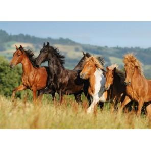 Лошади в степи Пазлы Castorland