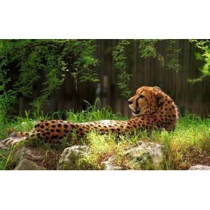 Леопард Набор для частичной вышивки бисером Color Kit