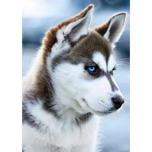 Снежный пес Алмазная мозаика (вышивка) Гранни