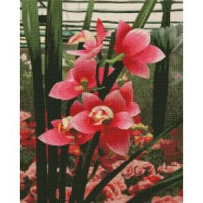 Нежные орхидеи Алмазная мозаика на подрамнике Цветной