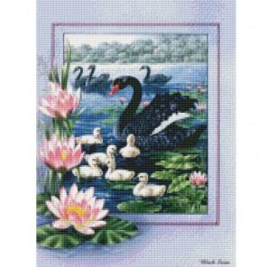 Черные лебеди Алмазная мозаика на подрамнике Цветной