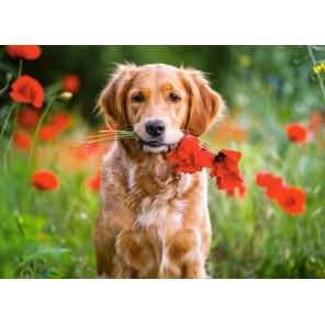 Цветы для вас Пазлы Castorland