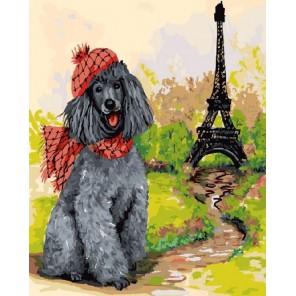 Пудель - парижанин Раскраска картина по номерам акриловыми красками на холсте Color Kit