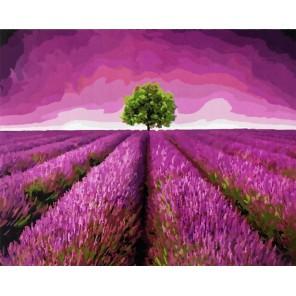 Лавандовые поля Раскраска картина по номерам на холсте