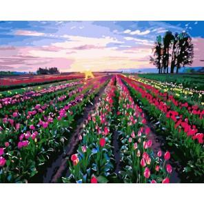Поле тюльпанов Раскраска картина по номерам акриловыми красками на холсте