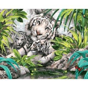 Белые тигрята Раскраска картина по номерам акриловыми красками на холсте