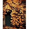 Дверь в осенних цветах Раскраска картина по номерам акриловыми красками на холсте