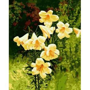Желтые колокольчики Раскраска картина по номерам акриловыми красками на холсте