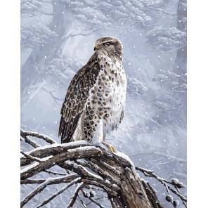 Степной орел Раскраска картина по номерам акриловыми красками на холсте