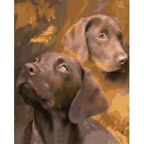 Шоколадные лабрадоры Раскраска картина по номерам акриловыми красками на холсте