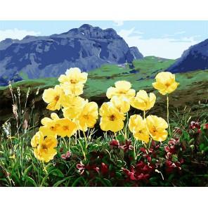 Горные цветы Раскраска картина по номерам акриловыми красками на холсте