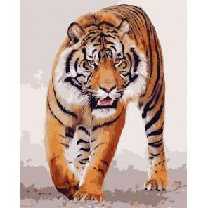 Бенгальский тигр Раскраска картина по номерам акриловыми красками на холсте